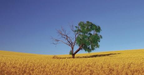 good tree, bad tree